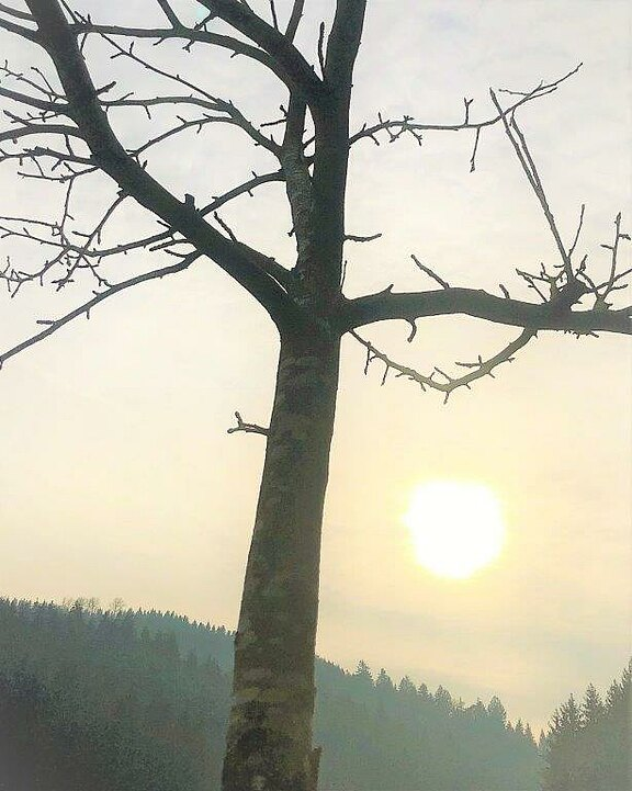 Obstbaum-Veredelung.jpg
